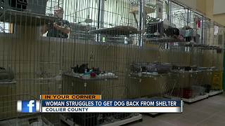 Woman Struggles to Get Dog Back From Shelter - Video