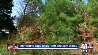 Tree maintenance during the drought