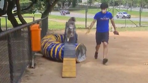 Super enthusiastic doggy loves exercising at the park