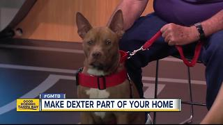 Rescues in Action: Make Dexter a part of your family