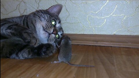 The cat is very funny playing with the mouse