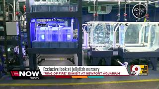 Exclusive: A nursery for jellyfish