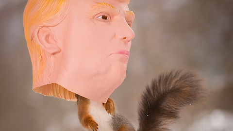 Trump the squirrel