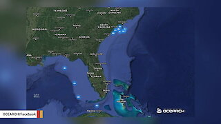 Mysterious Great White Shark Cluster Off Carolinas Sparks Speculation