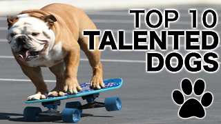 Top 10 Talented Dogs - Video