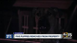 Authorities investigating 'deplorable conditions for pets at Valley home - Video