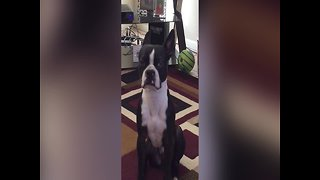 Dog Lets his Owner Know just how much he wants a Snack