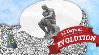 Does Evolution Have a Point? 12 Days of Evolution #12 - Video