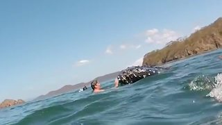Snorkelers have close encounter with baby humpback whale - Video