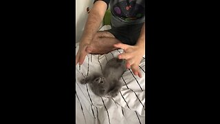 Kitten Plays With Owner In Cutest Possible Way - Video
