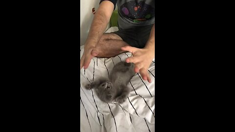 Kitten Plays With Owner In Cutest Possible Way