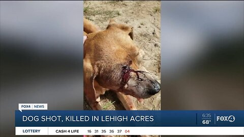 Reward being offered for information on person who shot a dog and left it for dead in Lehigh