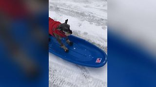 Sporty Sledding Dog - Video