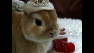 Japanese Bunnies Get Dressed Up - Video