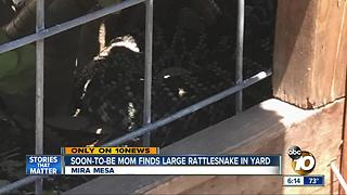 Soon-to-be-mom finds large rattlesnake in Mira Mesa yard - Video