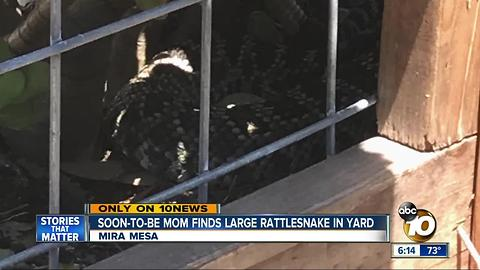 Soon-to-be-mom finds large rattlesnake in Mira Mesa yard