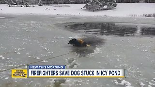 Colorado firefighters save dog stuck in icy pond