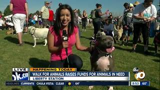 Walk for animals raises funds for animals in need - Video