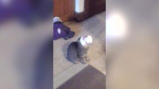 Kitty Sticks her Head in the Wrong Place