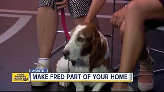 Aug. 5 Rescues in Action: Fred needs a forever home - Video