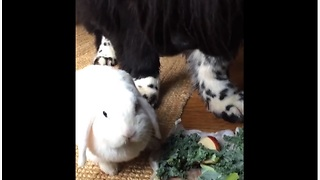 Newfie and bunny rabbit share their breakfast
