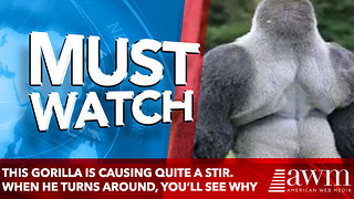 This Gorilla is Causing Quite a Stir. When He Turns Around, You'll See why
