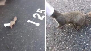 Hilarious video shows squirrel with head stuck inside yoghurt pot