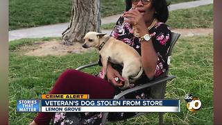 Veteran's dog stolen from Lemon Grove market