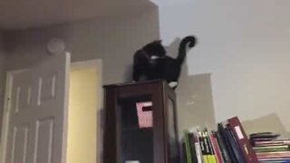 Funny cat loves chasing his own tail