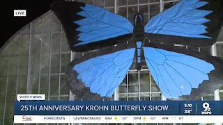 Krohn Conservatory opens this weekend with 'Butterflies of Bali' show