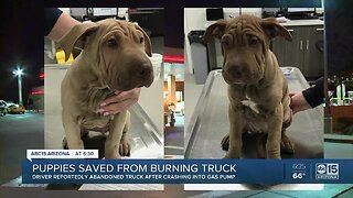 Driver crashes into Mesa gas pumps, leaves puppies in burning truck, police say