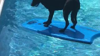 Dog Enjoys Pool Time As A Reward For Successful Spelling Bee