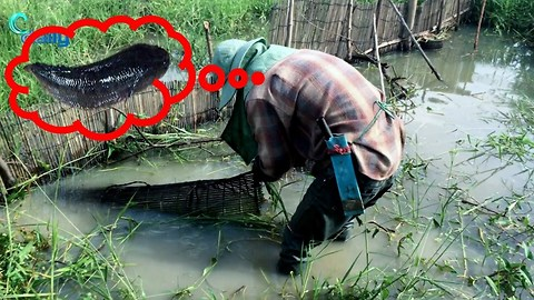 Amazing Fishing How to Make A Very Simple Fish Trap Easy Fish Trap in Cambodia