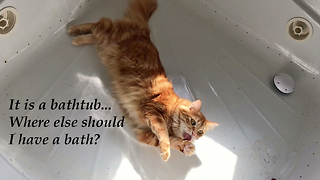 Funny Clever Cat Plays With Ball in the Bathtub
