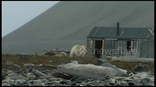 Kayakers have close encounter with polar bears in Norway - Video