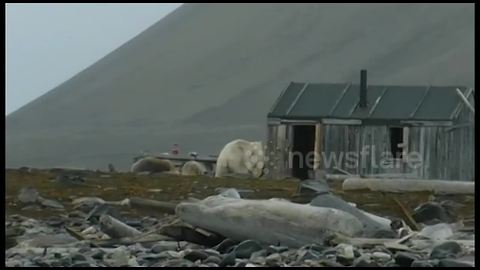 Kayakers Have Close Encounter With Polar Bears In Norway