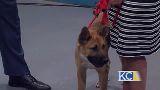 Coins for Paws is Wednesday night! - Video