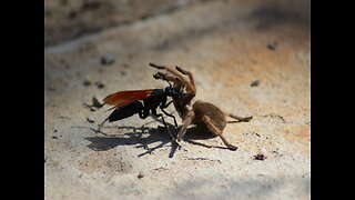 SCARY! 4 creepy bugs in Arizona - ABC15 Digital