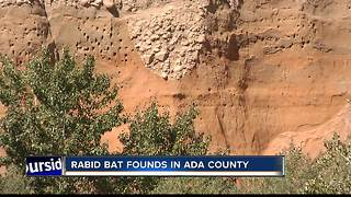 Health Department: Ada County bat tests positive for rabies - Video