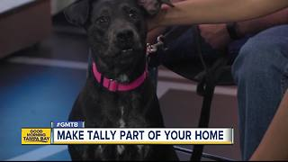 Aug. 19 Rescues in Action: Expand your family with Tally