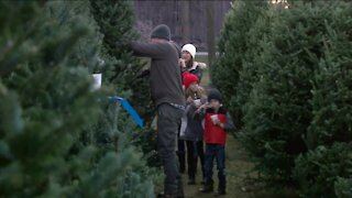 Christmas Tree farms look different during the pandemic