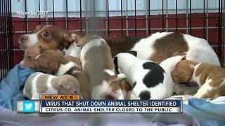 Citrus Co. animal shelter closed after virus - Video