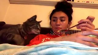 Cat snatches macaroni and cheese off spoon and into its mouth