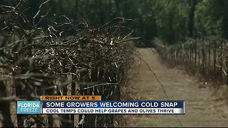 Cool temps could help grapes, olives thrive - Video