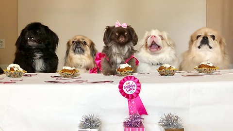 Rescue dog holds party for first