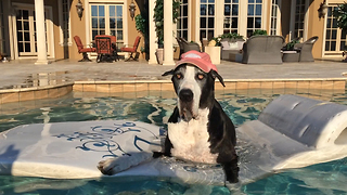 Harley Hat Wearing Great Dane enjoys the ride on her floatie