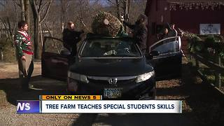 Unique Christmas tree farm teaches special students new skills - Video