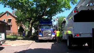Semi truck takes down tree branches and wires - Video