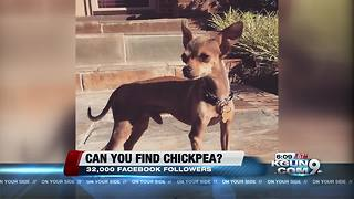 Internet sensation (and dog) missing - Video