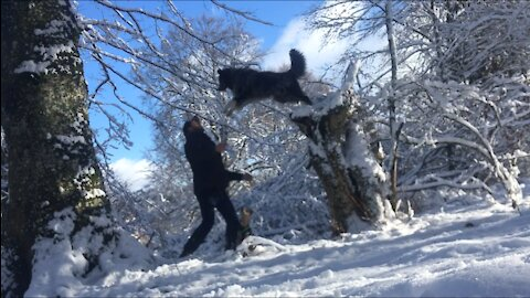 Dog trustfully jumps into owners arms